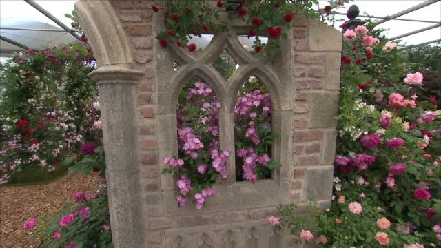 shows interior shots rose bushes in the peter beales roses exhibition display at the chelsea flower show on 21st may 2018 in london england united... - chelsea flower show stock videos & royalty-free footage