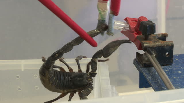 shows interior shots scientists milking venomous scorpion of its venom in venomtech limited lab the world could be cast back into the dark ages of... - antibiotic resistant stock videos and b-roll footage
