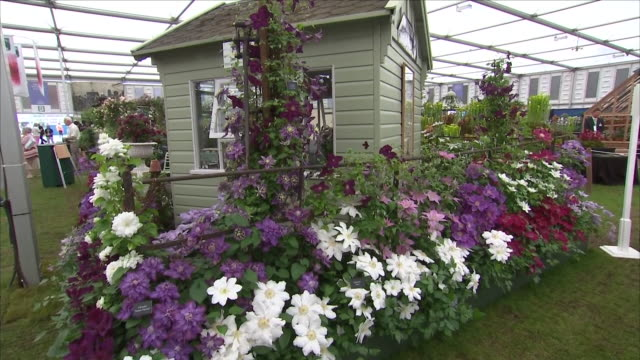 shows interior shots shed surrounded by display of flowers at the chelsea flower show on 21st may, 2018 in london, england, united kingdom - festival dei fiori di chelsea video stock e b–roll