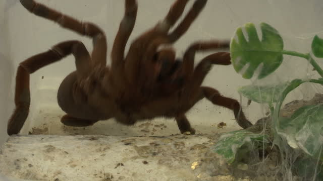shows interior shots venomous spider in a box in a lab with scientist moving it with stick the world could be cast back into the dark ages of... - antibiotic resistant stock videos and b-roll footage