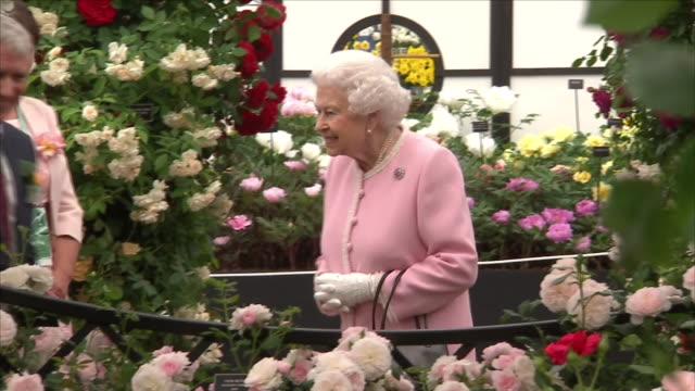 stockvideo's en b-roll-footage met shows iterior shots queen elizabeth ii standing framed by rose bushes in the peter beales roses exhibition display and smiling at flowers as she... - koningschap