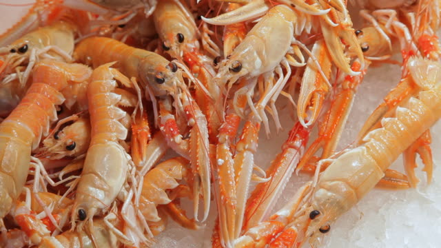 CU LD Shrimp Displayed on Ice in Market / Venice, Italy