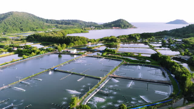 shrimp farm is an economic animal for export and domestic consumption. - prawn animal stock videos and b-roll footage