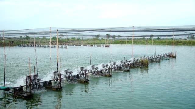 stockvideo's en b-roll-footage met garnalen boerderij - garnaal gerecht