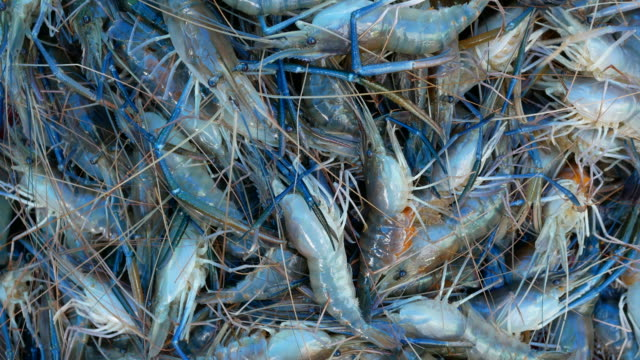 shrimp farm - prawn animal stock videos and b-roll footage