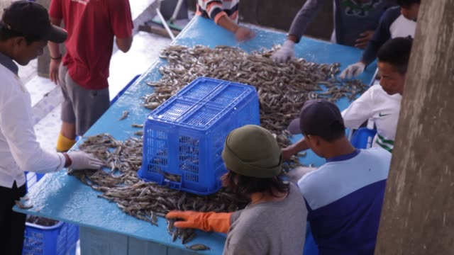 vidéos et rushes de shrimp farmers pour ice on a ton of ice on shrimp in a rectangular bin a shrimp farm in yogjakarta, java indonesia. - industrie de la pêche