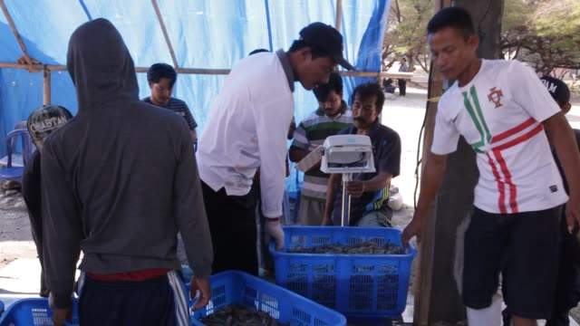 Shrimp farmers weigh a basket of shrimp at Shrimp Farm in Yogjakarta, Java Indonesia