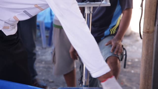 vídeos de stock, filmes e b-roll de shrimp farmers weigh a basket of shrimp at shrimp farm in yogjakarta, java indonesia. close shot - grupo mediano de animales