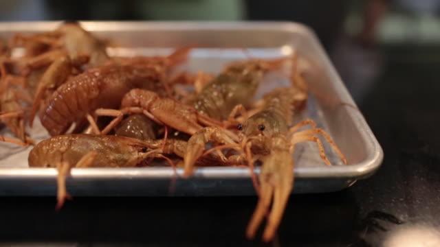 shrimp - invertebrato video stock e b–roll