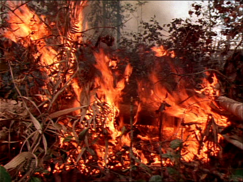 shrubs and branches burn in a rain forest. - zerstörung stock-videos und b-roll-filmmaterial