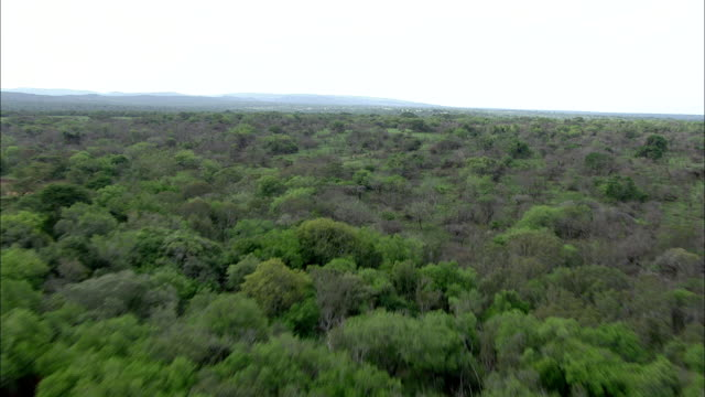 shrubs and trees cover vast south africa plains. - bush stock videos & royalty-free footage