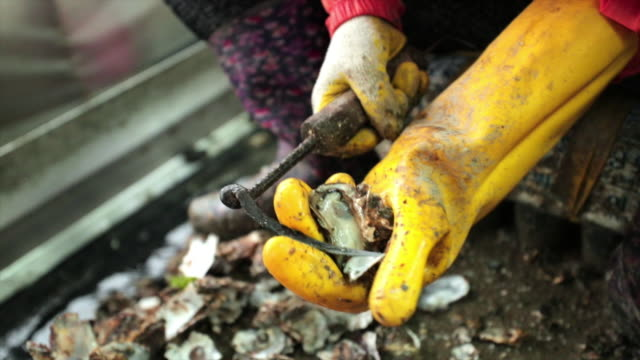 shucking an oyster with a metal oyster shucker - scratched stock videos & royalty-free footage