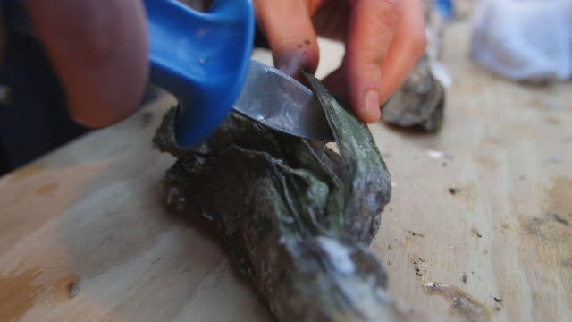 shucking oyster cu - wiese stock videos & royalty-free footage