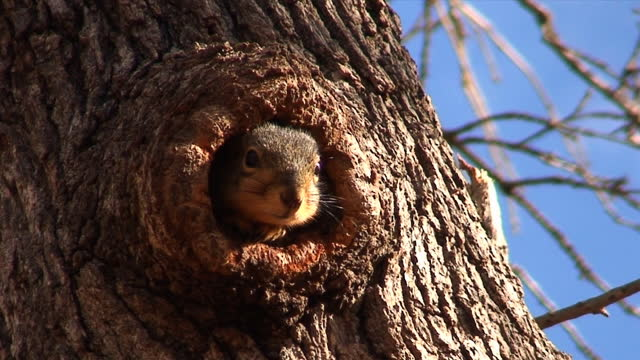 stockvideo's en b-roll-footage met shy squirrel - tunnel