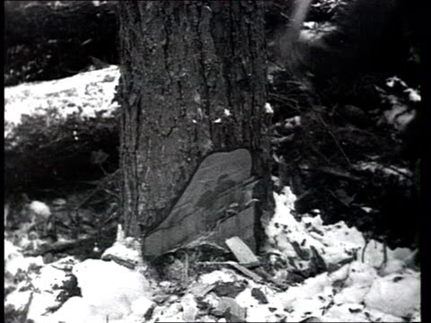 vidéos et rushes de siberia or central russia trees destruction lumberjacks' everyday life in prerevolutionary russia or early 1920s trees falling on ground wooden hut... - bûcheron