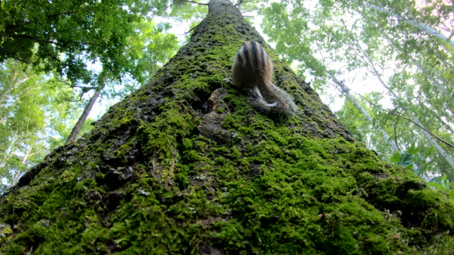 siberian chipmunk (eutamias sibiricus) - khingan nature reserve, russland - loch gewässer stock-videos und b-roll-filmmaterial