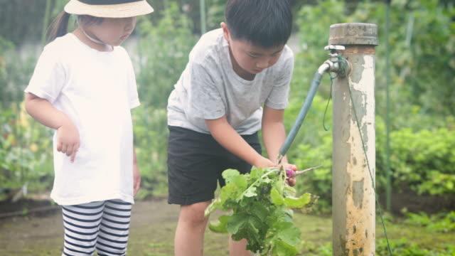 庭で野菜を収穫する兄弟 - vegetable点の映像素材/bロール