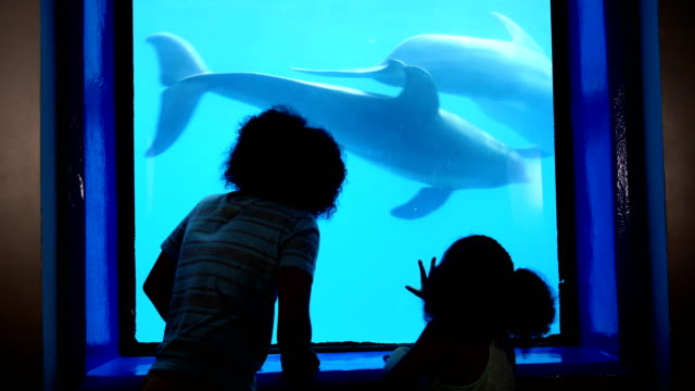 siblings at aquarium viewing dolphins underwater - cetacea stock videos & royalty-free footage
