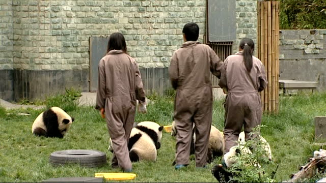 rescued pandas at wolong panda reserve landslide on side of mountain valley near to panda reserve / workers digging / zoo keeper carrying panda /... - 自然保護区点の映像素材/bロール
