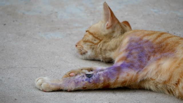 Sjuk katt med ett sår