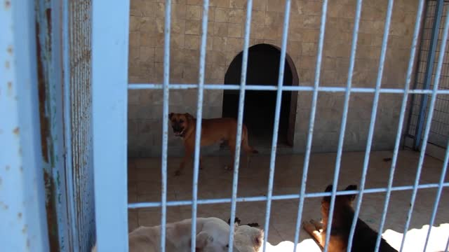 sick,crippled and abandoned derelict dogs and puppies in a pet shelter. captive animals stock video - captive animals stock videos & royalty-free footage