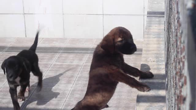 sjuka, förlamade och övergivna övergivna hundar och valpar i ett djurhem. beståndsvideo för djur i fångenskap - captive animals bildbanksvideor och videomaterial från bakom kulisserna