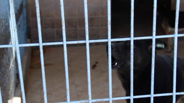 sjuka, handikappade och övergivna övergivna hundar i ett djurhem. beståndsvideo för djur i fångenskap - captive animals bildbanksvideor och videomaterial från bakom kulisserna