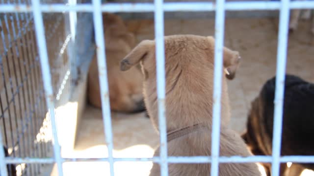 sick,crippled and abandoned derelict dogs in a pet shelter. captive animals stock video - captive animals stock videos & royalty-free footage