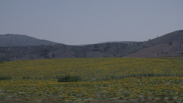 Side POV of car on Turkish road across fields of flowers