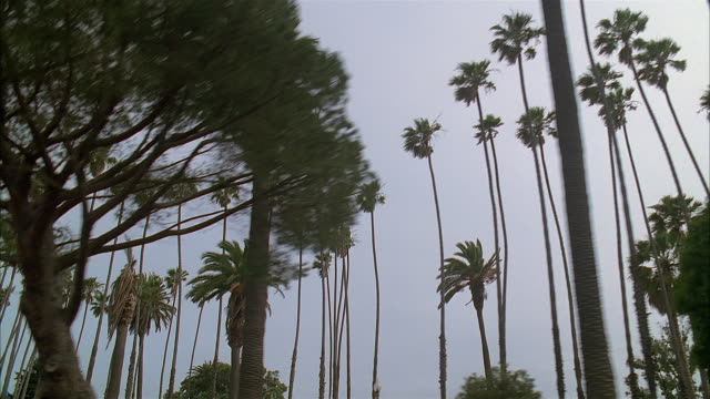 side car point of view driving on ocean avenue past palm trees in palisades park / santa monica, california - palisades park stock videos & royalty-free footage