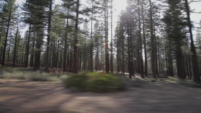 Side POV driving through a forest in Lake Tahoe
