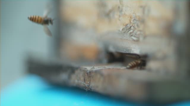 stockvideo's en b-roll-footage met side macro shot of bees entering hive - meer dan 40 seconden