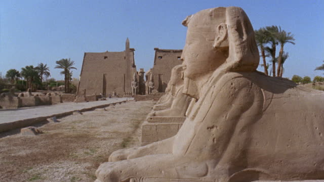 ms side of sphinx/tu ws avenue of the sphinxes leading up to luxor temple/ luxor, egypt - luxor thebes stock videos & royalty-free footage