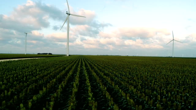 side pan across rows of corn aerial drone view of wind turbines in wind farm - corpus christi texas stock videos & royalty-free footage