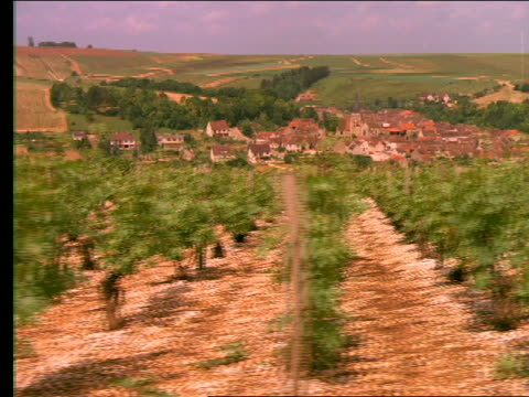 Side point of view past rows of vines in vineyard / village in background / Beines, France