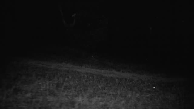 ms side pov shot of bicycle riding along country road at night - straßenrand stock-videos und b-roll-filmmaterial