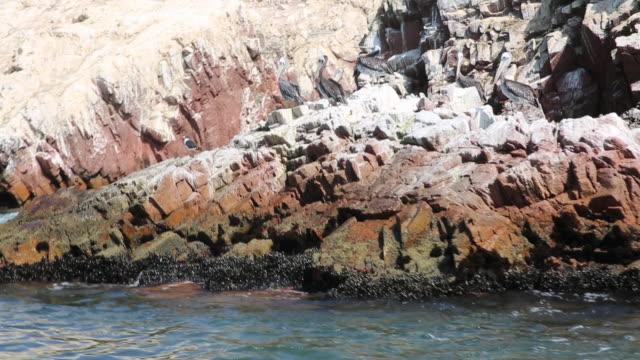 MS POV side Shot of sea lion on pisco bay / Paracas, Nazca, Peru