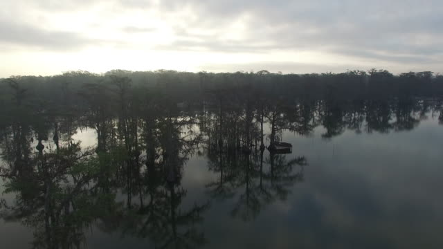 side tracking close in swamp with reflection - drone aerial 4k everglades, swamp bayou with wildlife alligator nesting ibis, anhinga, cormorant, snowy egret, spoonbill, blue heron, eagle, hawk, cypress tree 4k nature/wildlife/weather - bayou lafourche stock-videos und b-roll-filmmaterial