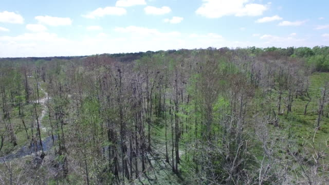 Side tracking over birds in nest - Drone Aerial 4K Everglades, Swamp bayou with wildlife alligator nesting Ibis, Anhinga, Cormorant, Snowy Egret, Spoonbill, Blue Heron, eagle, hawk, cypress tree 4K Nature/Wildlife/Weather Drone Aerial Video