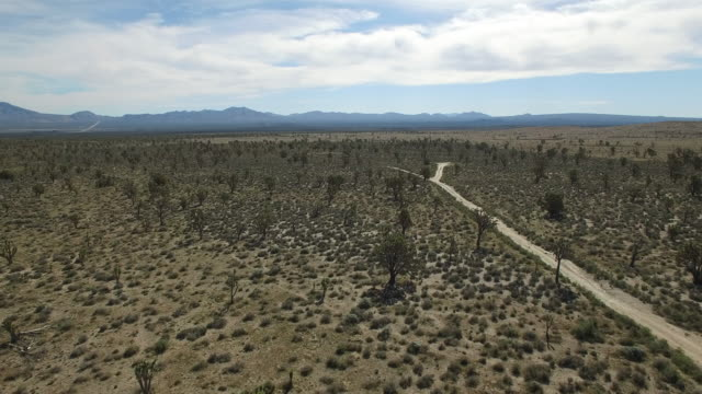 Side tracking over road in joshua tree forest - Drone Aerial video 4K Joshua Tree National Forest, Desert barren land, no people with remote location cactus California desert, Mojave desert, with extreme terrain 4K Nature/Wildlife/Weather