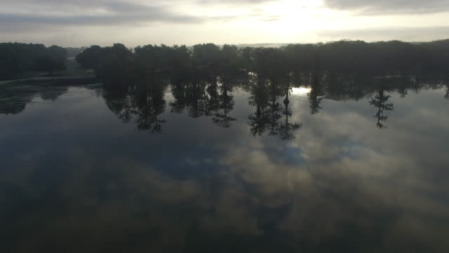 side tracking view of swamp with reflection - drone aerial 4k everglades, swamp bayou with wildlife alligator nesting ibis, anhinga, cormorant, snowy egret, spoonbill, blue heron, eagle, hawk, cypress tree 4k transportation - maryland delstat bildbanksvideor och videomaterial från bakom kulisserna