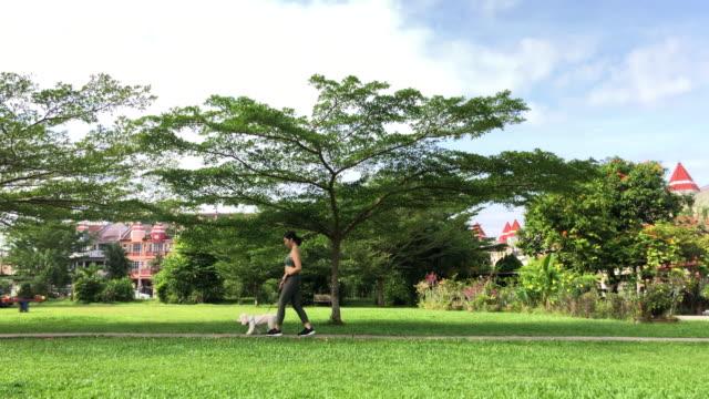 stockvideo's en b-roll-footage met zijaanzicht van aziatische chinese glimlachende wijfje dat met haar hond bij openbaar park vroege ochtend loopt - breed