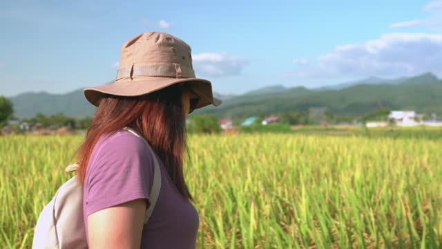 vidéos et rushes de vue latérale d'une femme asiatique marchant sur la crête de la rizières sous le coucher du soleil dans une scène agricole non urbaine, le nord de la thaïlande avec une émotion excitée et positive - non urban scene