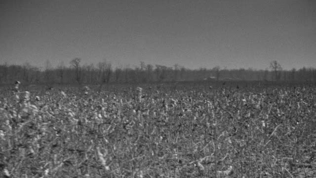 ms side pov view of car driving along side cotton fields in mississippi - südliche bundesstaaten der usa stock-videos und b-roll-filmmaterial