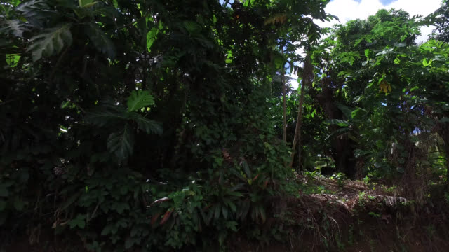 side view of seaside road with tropical vegetation - isola di tahaa video stock e b–roll