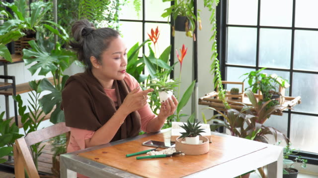 side view of senior beautiful woman planting tropical tree in tiny pot as cactus with happiness, relaxation in an indoor garden of a greenhouse as hobbies, and small business. lifestyle of asian active seniors with white hair after retirement as florist. - white hair stock videos & royalty-free footage