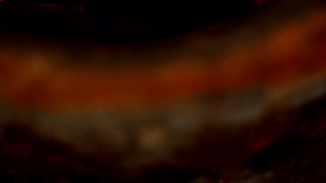 vídeos y material grabado en eventos de stock de vista lateral: como la sopa de limoncillos - pescado y mariscos