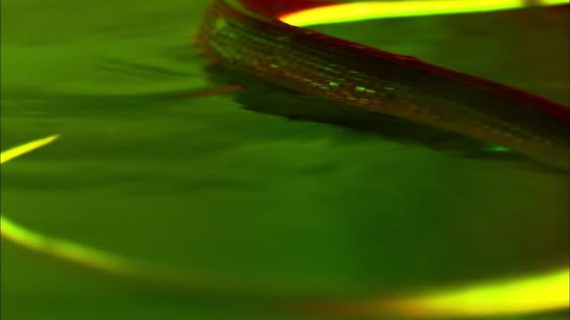 a sidewinder snake swims in a brightly lit aquarium. - brightly lit点の映像素材/bロール