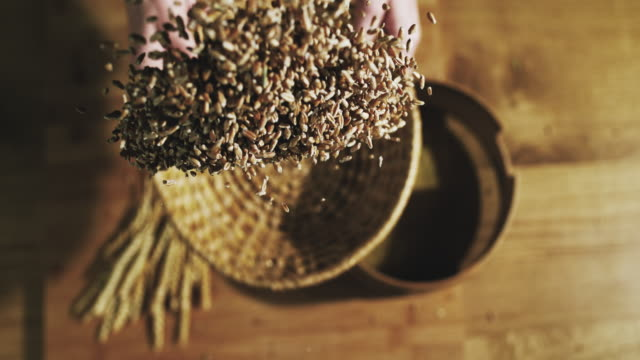 slo mo sifting the wheat grains - cereal plant stock videos & royalty-free footage