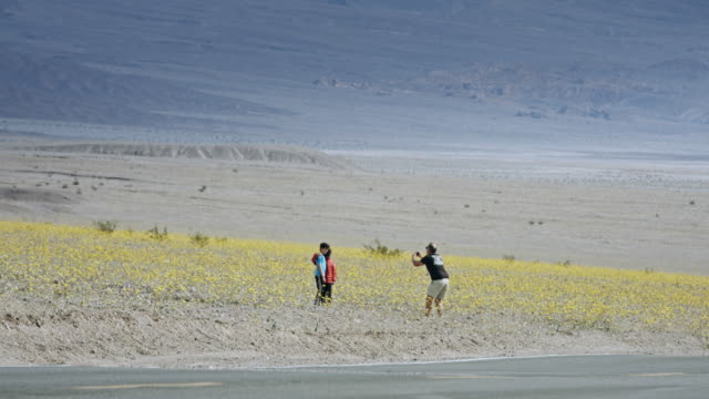 sightseers at death valley super bloom - death valley national park stock videos & royalty-free footage